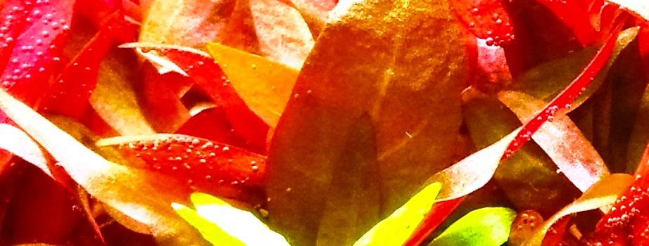 slider-image czerwona
